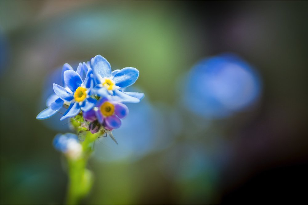 forget me nots trust